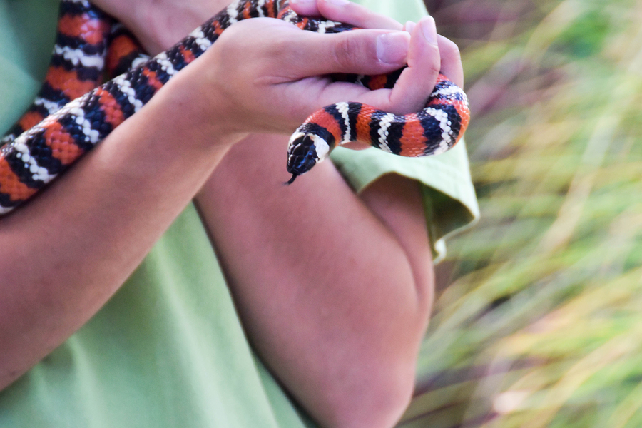 picture of someone handling a snake