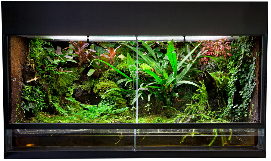 picture of a snake terrarium